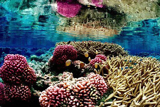 珊瑚礁,放射性碳测年